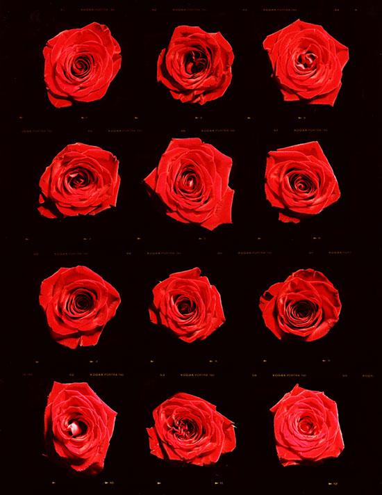 001 matthew_leifheit_A-Dozen-Roses-(for-TOny).jpg