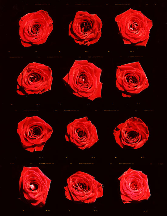 001 matthew_leifheit_A-Dozen-Roses-(for-TOny).jpg