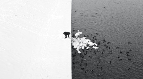 A_Man_Feeding_Swans_in_the_Snow-Land_Sea_Nature-Marcin_Ryczek.jpg