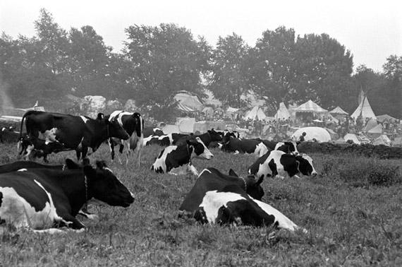 Baron-Wolman-Cows.jpg