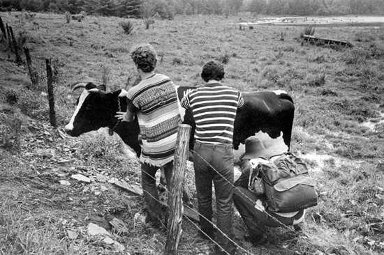 Baron-Wolman-Milking-Cow.jpg