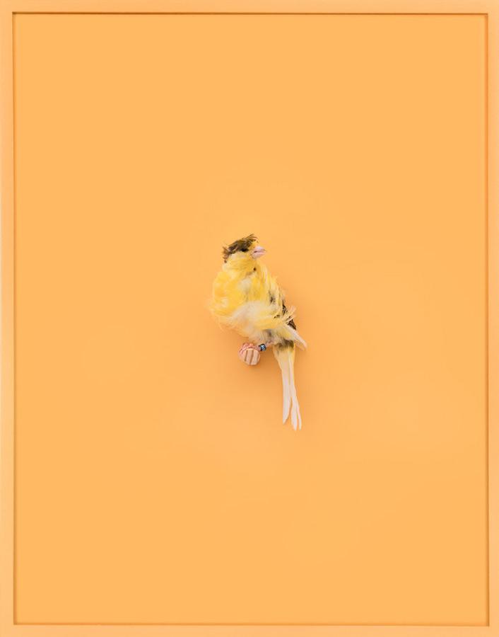 Daniel-Handal-aCurator-YellowParisianFrilledCanary_AcquaSanta-b01.jpg
