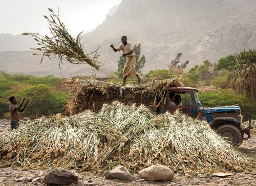 Don_Whitebread_Khamis-Benisa'ad-Farm-Workers.jpg