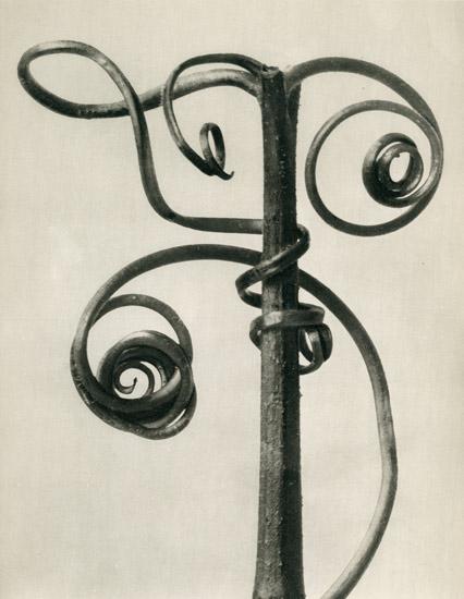 Karl-Blossfeldt-Cucurbita-(Tendrils-of-a-pumpkin).jpg