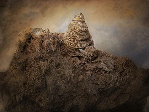 fossil_01_art_murphy.jpg