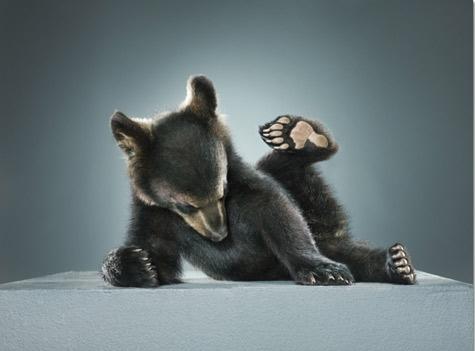 jane-fonda-bear-1.jpg