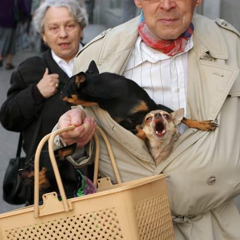 rutoed_lessismore_dogcoat.jpg
