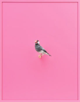 The frames are painted to match the predominant background color in each image, and the bird is represented life-size to scale.