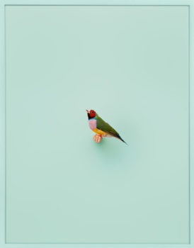 Birds are on view now through July 7, 2018 at ClampArt, NYC.