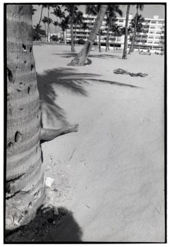From the series: GODLIS: Miami Beach