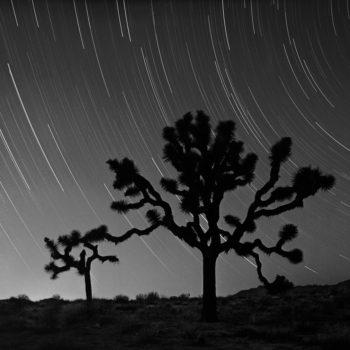 Star Tracks Over Joshua Trees