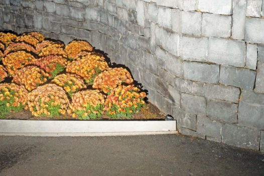 "Flower bed  15-11-12/15:34:16 51 ° 30'11.75"" N, 0 ° 01'06.89"" W"