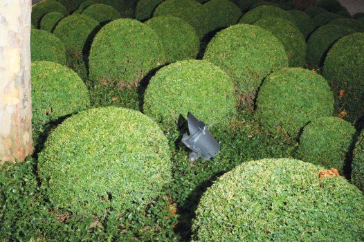 "Circular hedge design  13-08-12/11:00:18/  51 ° 30'19.50"" N, 0 ° 01'28.17"" W"