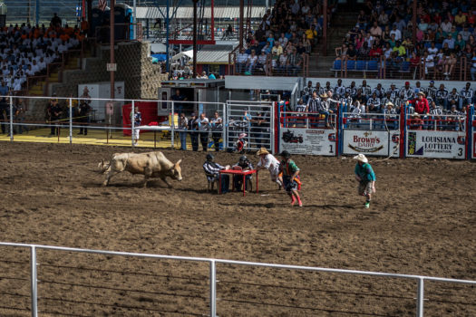 Events include wild horse racing (three-man teams attempt to grab ropes dragged by six wild horses long enough for a team member to mount), bull-dogging (wrestling an animal to the ground), wild cow milking (exactly what it sounds like), and bull riding (participants must sit on a one-ton Brahma bull for six seconds.)