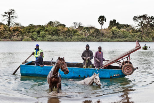 Men from the Fula tribe swim their horses across River Gambia next to a local ferry at the village of Karantaba where the famous Scottish explorer, Mungo Park, set off for two of his journeys in search of the Niger river 200 years ago.