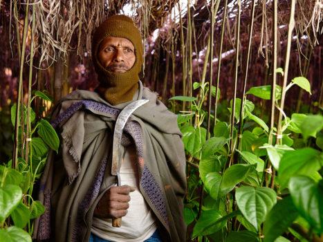 Betel leaf plantation owner $125 weekly