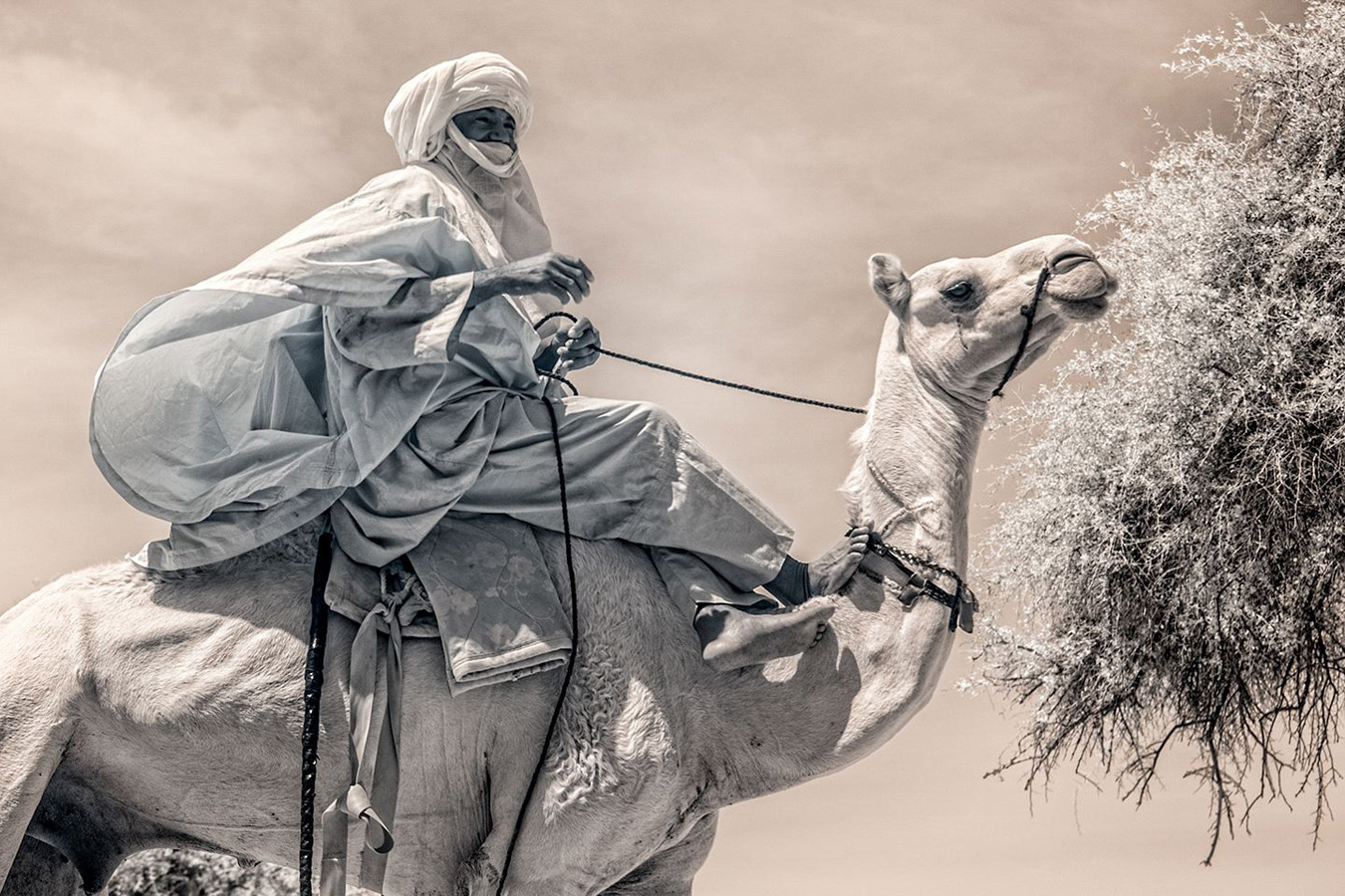 From the series: Terri Gold: 1000 Nomads