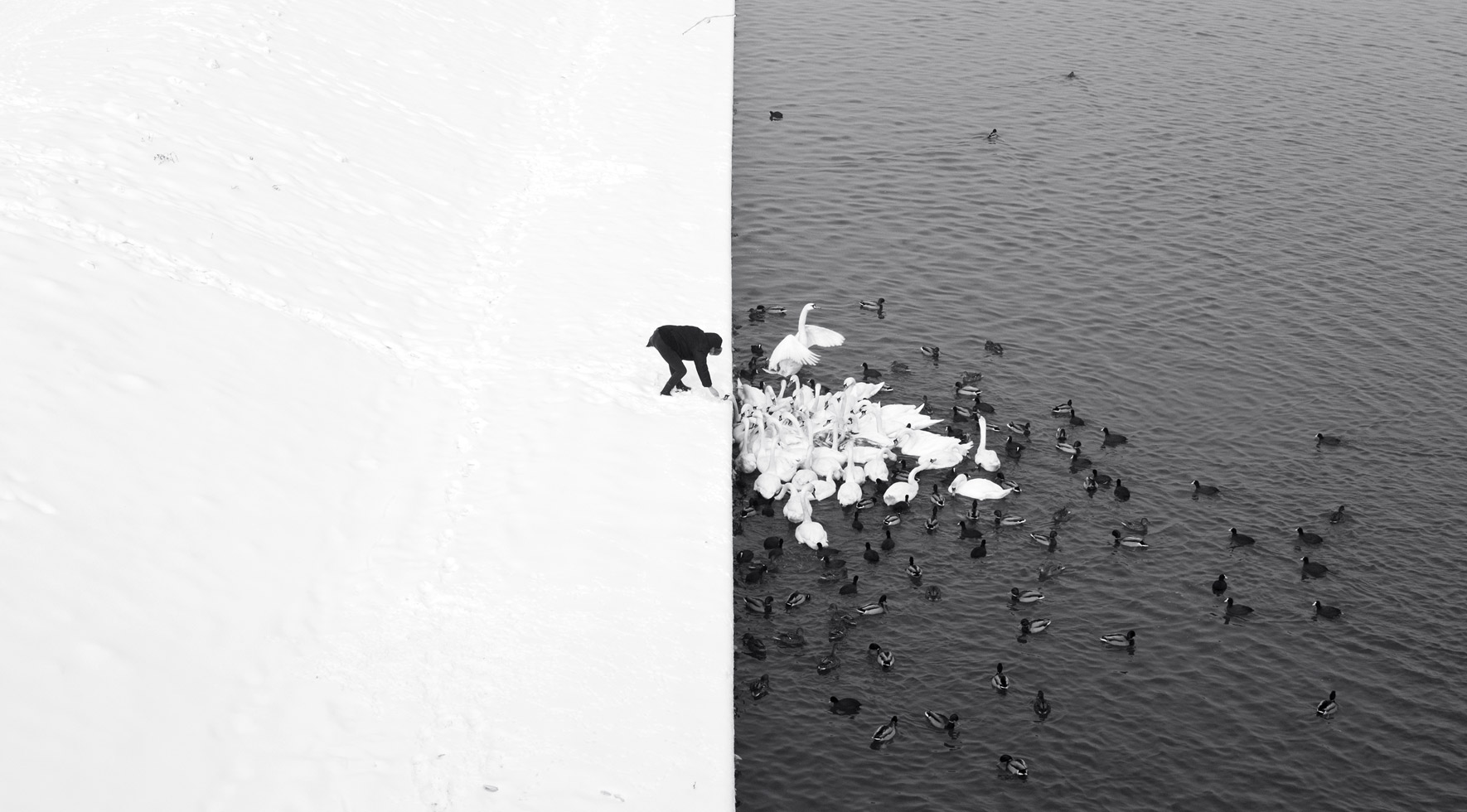 A Man Feeding Swans in the Snow, Marcin Ryczek (Poland)  1st place winner in the Landscape/Seascape/Nature category