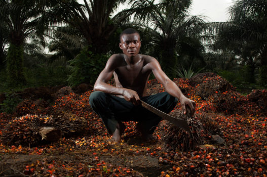 """Calabar, Nigeria, 2011 """"Henshaw is 20 years old and utilizes a machete to cut the bunches of fruit from oil palms. The palm oil industry is having a devastating impact on the environment, but with few options, local workers see the opportunity as a source of employment."""""""