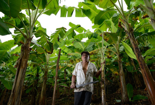 """Ometepe, Nicaragua, 2012 """"Francisco poses in the middle of his plantain farm. He has worked with a machete for over 45 years. He runs through at least one machete each year but joked that if he wasn't so lazy, that he would probably go through more."""""""
