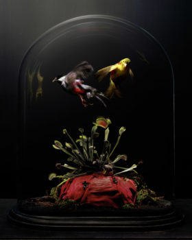 Globe de Mariée 2, Carole Suety (UK)  1st place in the Still Life category