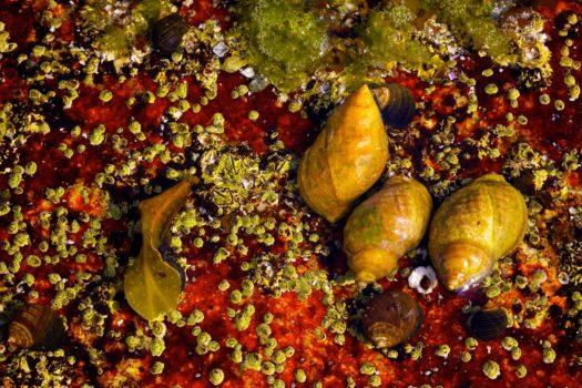 Ted Morrison: Acadia Tide Pools  Saltwater Splendour