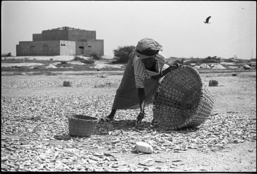 """""""If you are going to ask from God, take a large basket."""" Nigerian proverb  A woman dries fish on the beach to sell in the market. The women formed a cooperative to build a fish-processing center where they can dry fish in a more sanitary way and increase their production.   Mbao, Senegal, 1988"""