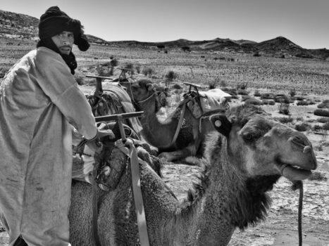 Camel Wrangler, Draa Tafilalet, Morocco