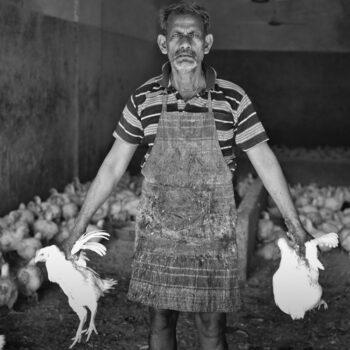 Chicken Wrangler, Thrissur, India